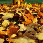 Autumnal soup recipe